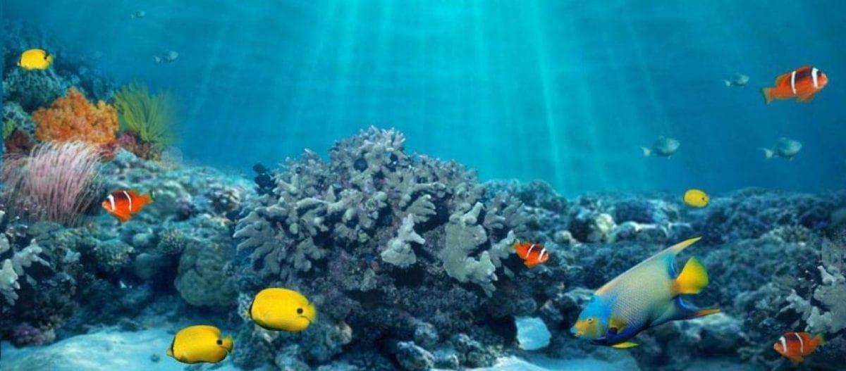 Σε τροπική θάλασσα μετατράπηκε η Ανατολική Μεσόγειος