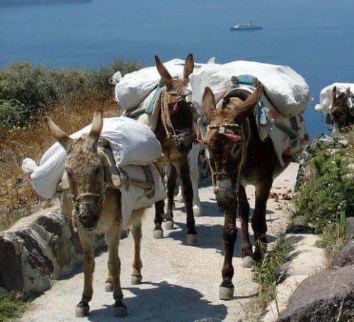 Η (Τουριστική) Ελλάδα Δεν Αγαπάει τα Γαϊδουράκια και τα Άλογά της