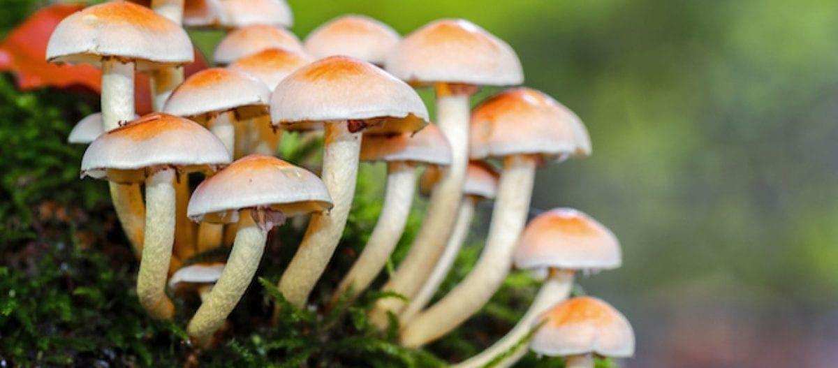 Πάνω από 2 εκατ. μύκητες υπάρχουν στον κόσμο αποκαλύπτει έρευνα – Από τα μανιτάρια μέχρι πάνω στο σώμα
