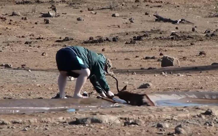 Τουρίστας σταματά και σώζει άγριο ζώο που κόλλησε στη λάσπη