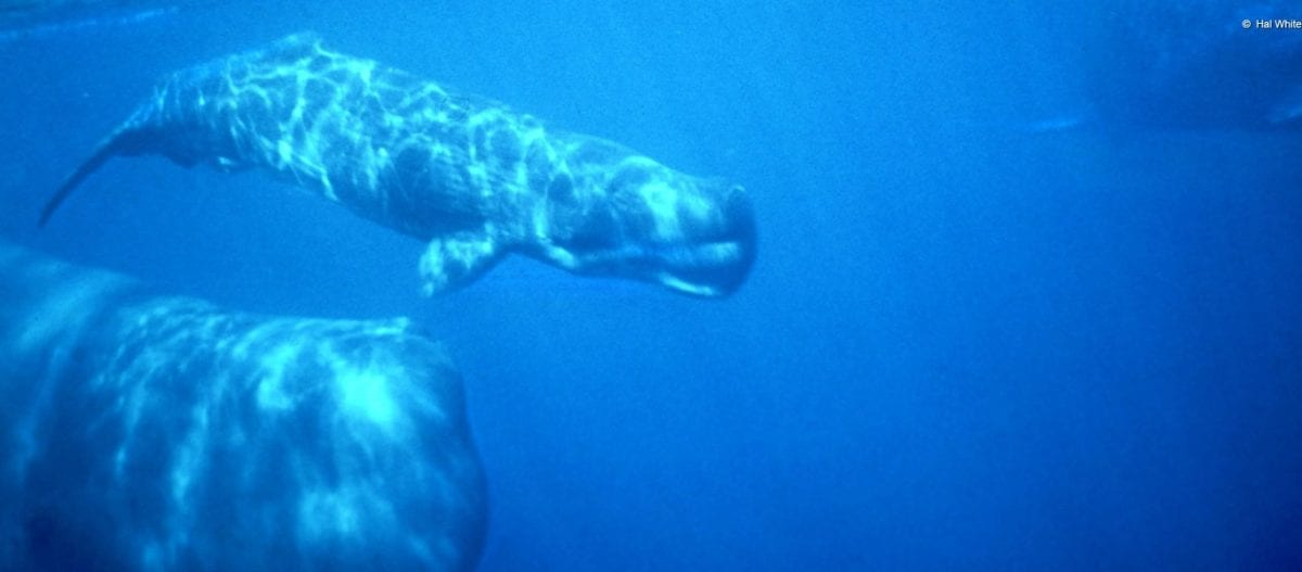 Ειρηνικός Ωκεανός: Ανακαλύφθηκαν τρία νέα παράξενα θαλάσσια είδη σχεδόν 6,5 χλμ. κάτω από τη θάλασσα (βίντεο-φωτο)