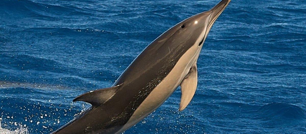 Δελφίνι γεννάει μπροστά στην κάμερα (βίντεο)