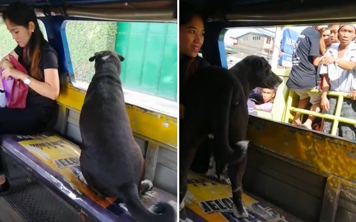 Ο σκύλος πήρε το… λεωφορείο για να προλάβει την ιδιοκτήτριά του