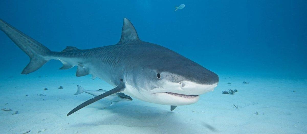 Έλληνας βρήκε τραγικό θάνατο από επίθεση καρχαρία στην Αυστραλία