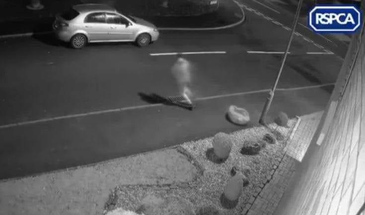 Η συγκινητική ιστορία του Σνούπ που τον εγκατέλειψε ο ιδιοκτήτης του έγινε viral (βίντεο)