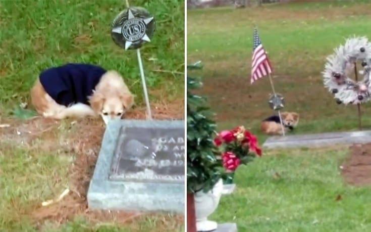 Η πιστή σκυλίτσα που αρνείται να φύγει από τον τάφο της αφεντικίνας της