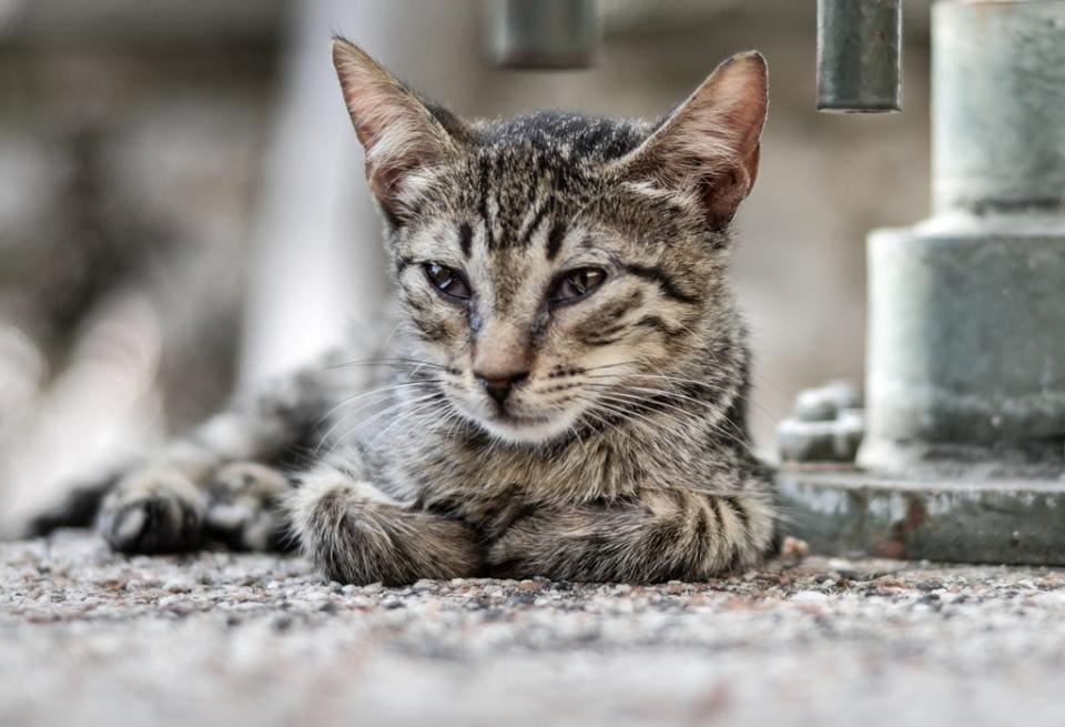Ρόδος : Ποινή φυλάκισης 7 μηνών σε 78χρονο που πυροβόλησε γάτα με αεροβόλο