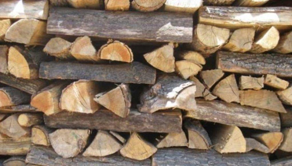 Εκδόθηκε απόφαση για τη συλλογή ξύλων από τα δάση της Δωδεκανήσου