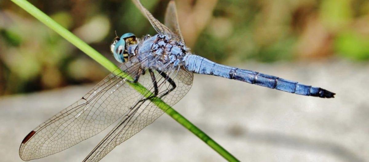 Εξαφανίζονται τα έντομα του πλανήτη- «Έρχεται» κατάρρευση των οικοσυστημάτων της φύσης