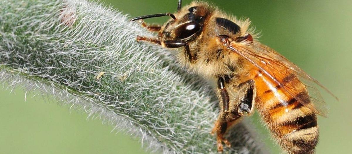 Ευρωπαίοι επιστήμονες χρησιμοποίησαν ρομπότ ως μεσάζοντες για να «μιλήσουν» μέλισσες και ψάρια