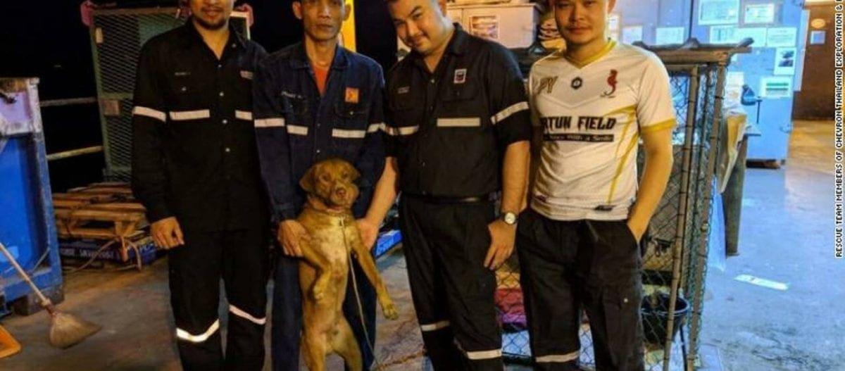 Σκύλος βρέθηκε μεσοπέλαγα, 200 χιλιόμετρα από την ακτή!
