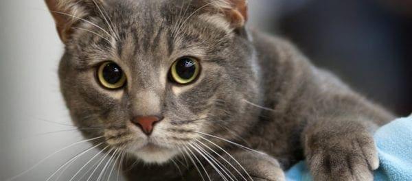 Η Αυστραλία θα θανατώσει εκατομμύρια γάτες πετώντας δηλητηριασμένα λουκάνικα από αεροπλάνα