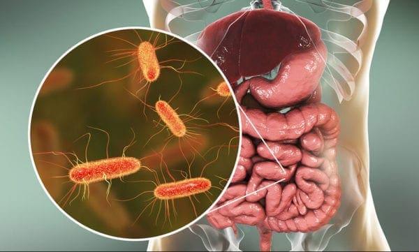 Το μικροβίωμα του εντέρου παίζει καθοριστικό ρόλο στον καρκίνο του εντέρου