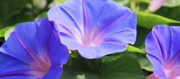 Το φυτό που κρύβει μια δραστική αντικαρκινική θεραπεία