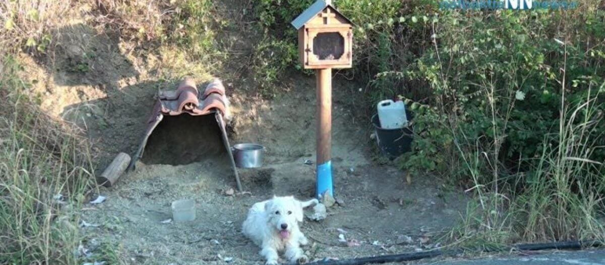 Σκυλάκι στην Ναυπακτία ζει εδώ και 1,5 χρόνο στο σημείο που σκοτώθηκε το αφεντικό του (βίντεο)