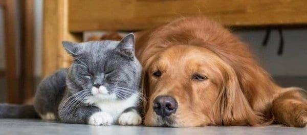 Τα κατοικίδια ζώα ωφελούν σημαντικά την υγεία σύμφωνα με νέα μελέτη