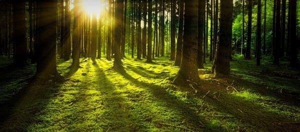 Έρευνα αποκαλύπτει: Το αγκάλιασμα των δέντρων βοηθά στην καλύτερη υγεία του ανθρώπου