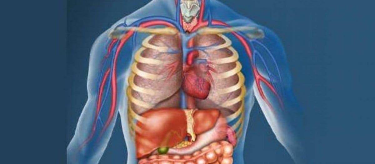 Επιστήμονες ανακάλυψαν νέο όργανο στο ανθρώπινο σώμα – Ποια είναι η λειτουργία του