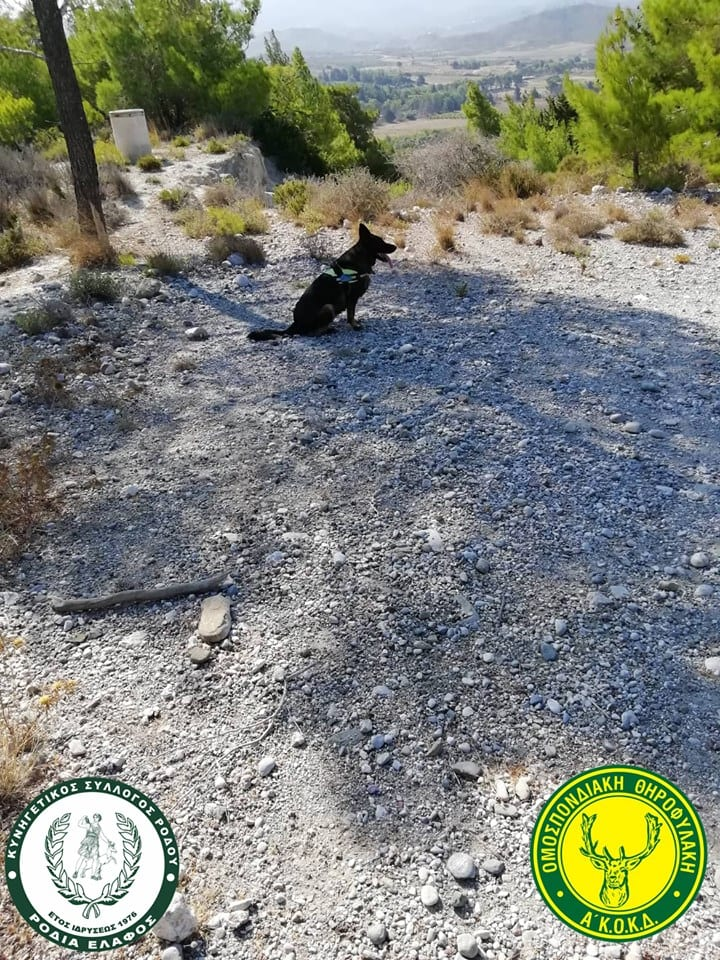 Ρόδος : Φόλες και νεκρά σκυλάκια εντόπισε ο εκπαιδευμένος σκύλος της Θηροφυλακής