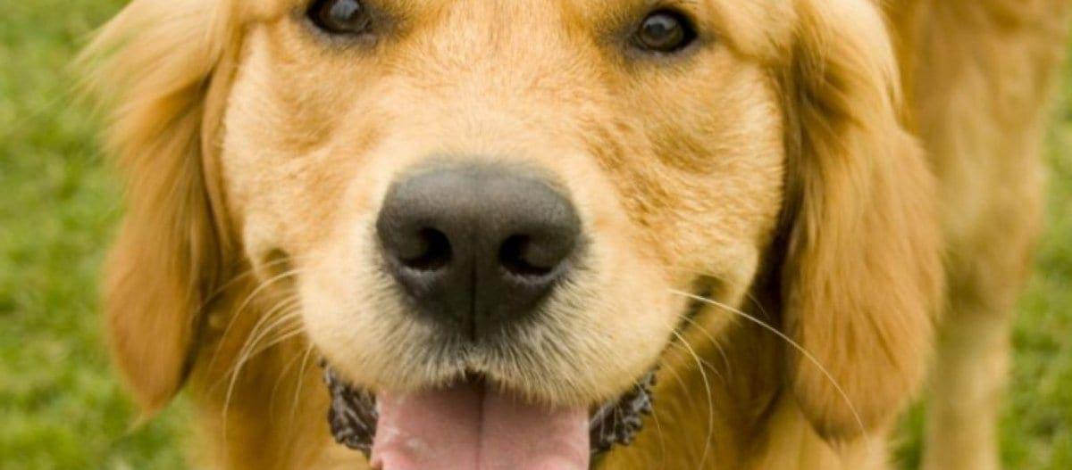 Για ποιο λόγο γρυλίζει ο σκύλος;