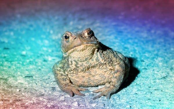 Ο ψυχεδελικός βάτραχος που μπορεί να νικήσει μόνιμα την κατάθλιψη