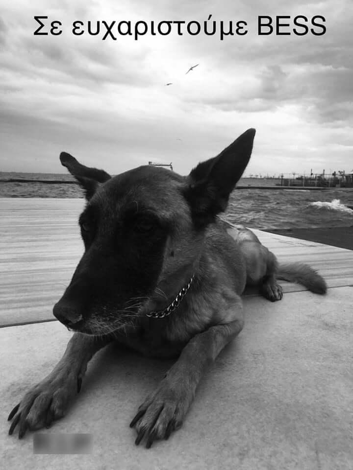 """""""Έφυγε"""" από τη ζωή η """"BESS"""" ο αστυνομικός σκύλος που συνέβαλε στον αγώνα κατά των ναρκωτικών"""
