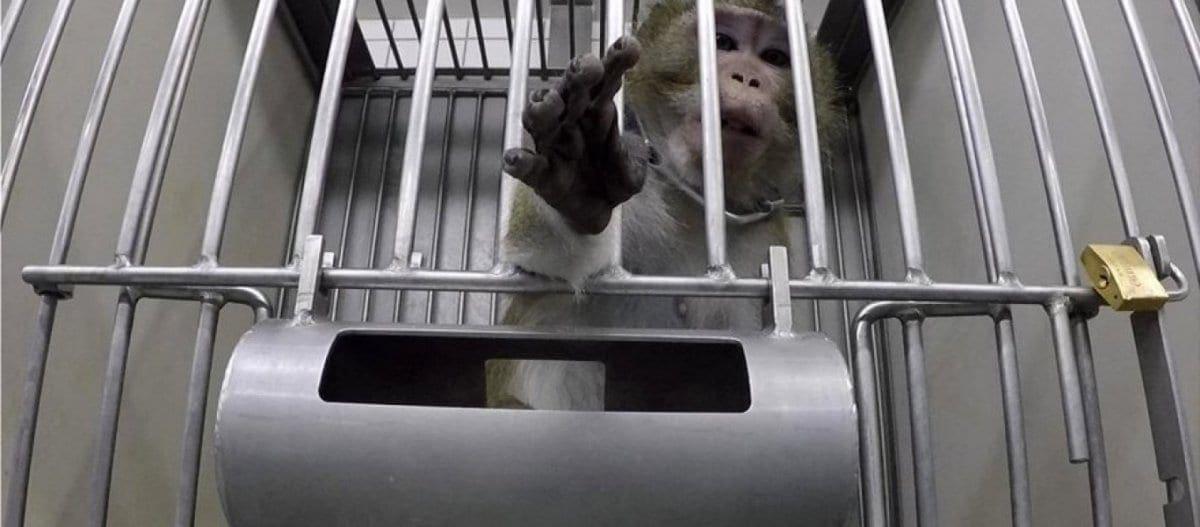 Φρίκη στη Γερμανία: Σκληρές εικόνες από πειράματα σε ζώα (βίντεο)