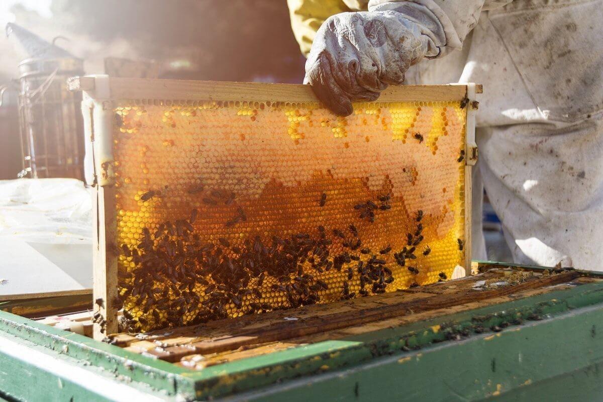 «Ρόδος – Μήνας Μελισσοκομίας 2020»-Εκπαιδευτικό διήμερο