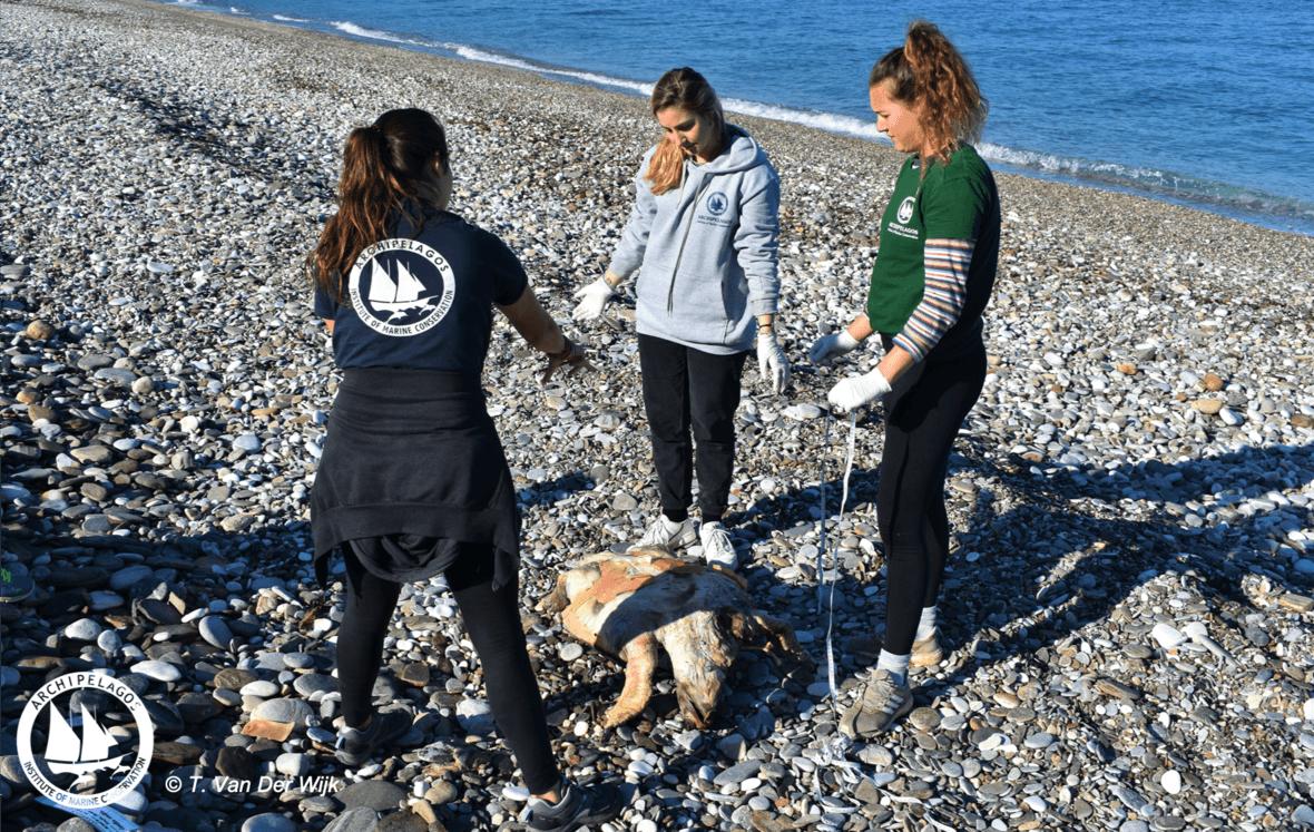 Σπάνια Είδη Nεκρά στις Ακτές του Αιγαίου
