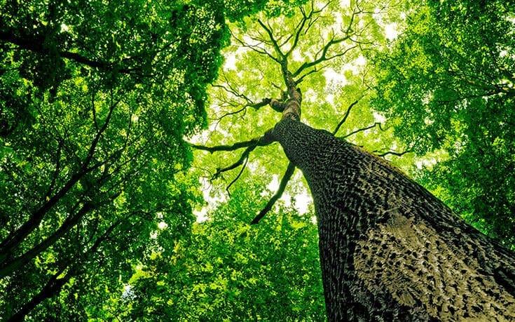 Δραματική αλλαγή: Η κλιματική αλλαγή αλλάζει τα δάση και κονταίνει τα δέντρα – Τι δείχνει νέα έρευνα