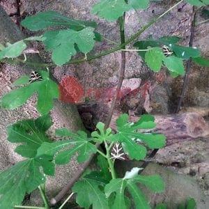 Γεμίζει και το πάρκο του Ροδινιού πεταλούδες σαν την Κοιλάδα των Πεταλούδων (φωτό)