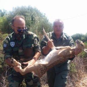 Ρόδος : Ακόμα ένα ελαφάκι έσωσαν οι δασοφύλακες (φωτογραφίες)