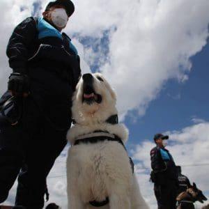 Σκύλοι στη Φινλανδία ανιχνεύουν τον κορoνοϊό πέντε μέρες πριν την εμφάνιση των συμπτωμάτων