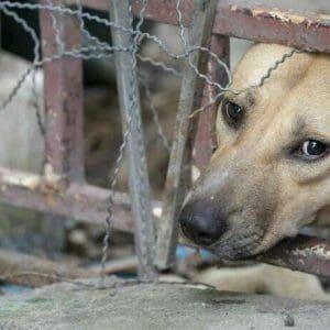 Στο Αυτόφωρο όσοι κακοποιούν ζώα – Τι αναφέρει η εγκύκλιος του Αρείου Πάγου