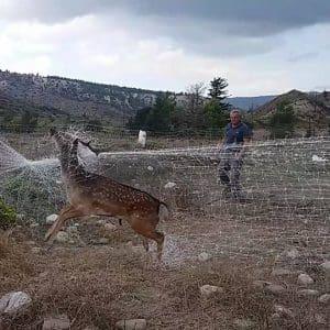 Ακόμα ένα ελάφι της Ρόδου απεγκλωβίστηκε απο τα δίχτυα