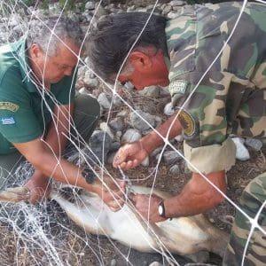 Ακόμα ένα ελαφάκι απελευθερώθηκε απο δίχτυα (βίντεο)