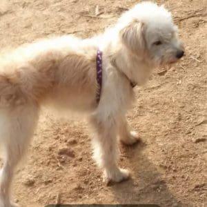 Σκύλος περπάτησε για 26 μέρες για να φτάσει στο σπίτι του – Τον είχαν ξεχάσει σε βενζινάδικο (φώτο)